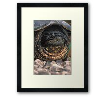 Snapping Turtle Framed Print