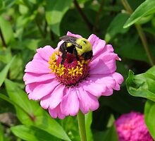 Bizzy Bumble Bee by photroen