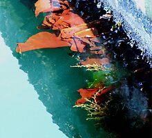 Sea....Weeds? by Dawn Palmerley