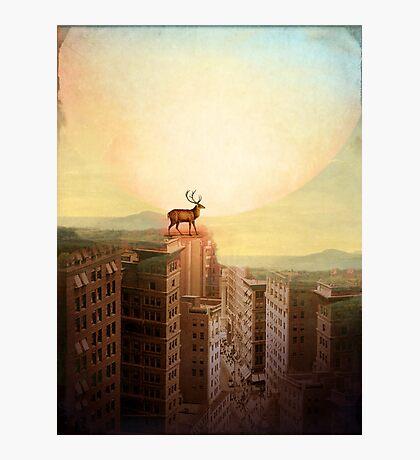 Deer at Dawn Photographic Print