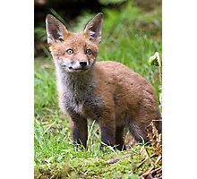 Fox Cub Photographic Print