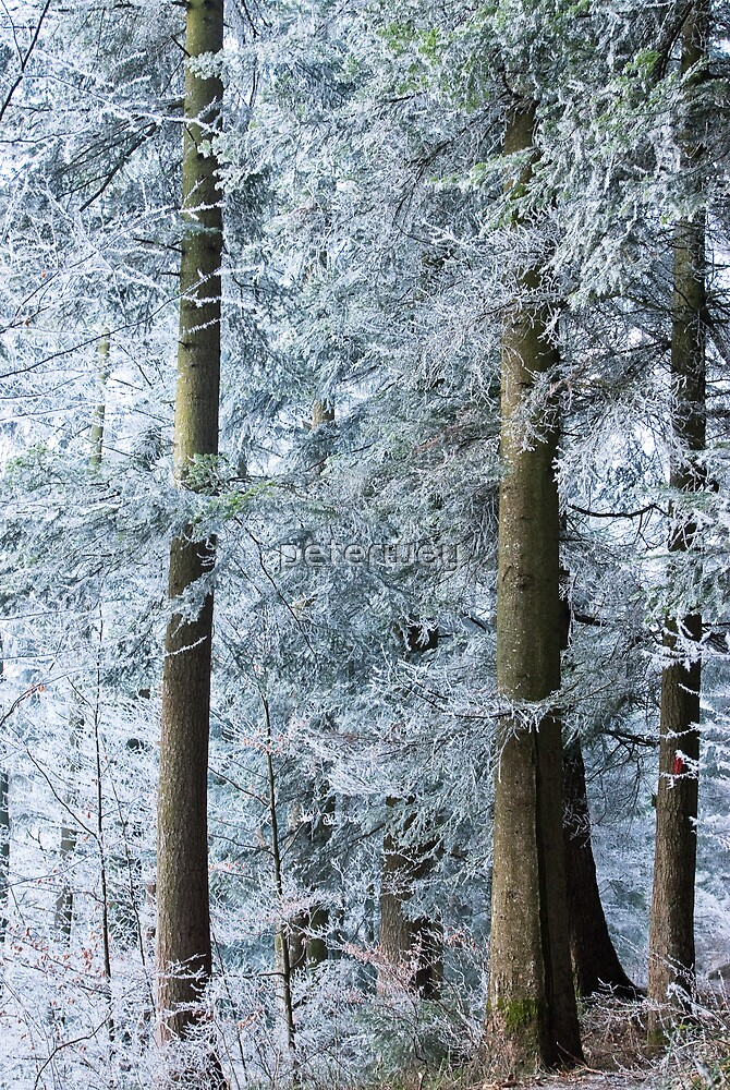 white trees in winter by peterwey