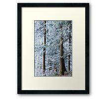 white trees in winter Framed Print