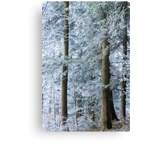 white trees in winter Canvas Print
