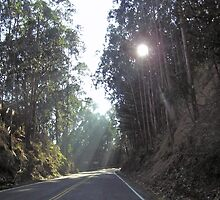 Sunlight filtered through the trees and falling on a stretch of the highway outside San Francisco by ashishagarwal74