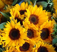 Giant sunflowers for sale in the Swiss city of Lucerne by ashishagarwal74