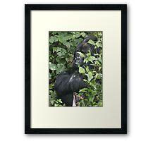 Hide And Seek ~ Gorilla Style Framed Print