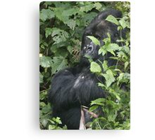 Hide And Seek ~ Gorilla Style Canvas Print