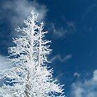 Snow Dust by Matt Rhodes