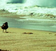 BEACH BLISS - Calmness in the Storm Sticker