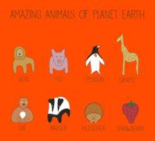 Amazing Animals Kids Clothes