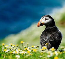 Puffin by Owen Burke