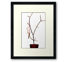 And A Cartridge in a Bare Tree Framed Print