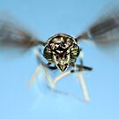 Wasp flying by jimmy hoffman