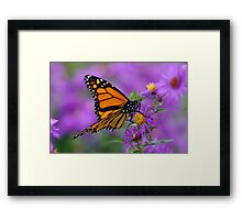 Monarch and Asters Framed Print