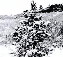 The Littlest Christmas Tree by Jon Burch