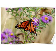 Monarch and Asters 2 Poster