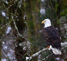 Perched by JWallace