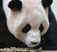 Yang Guang by Dorothy Thomson