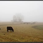 Foggy Morning on the Farm by Jerry  Mumma