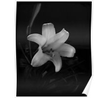 Easter Lily II Poster