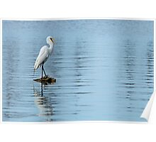 Egret at Spanish Lake Poster