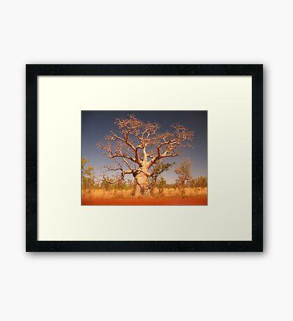 Kimberley Boab Tree. Framed Print