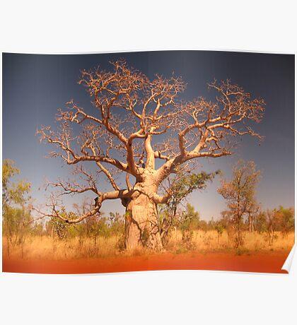 Kimberley Boab Tree. Poster