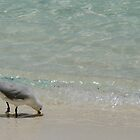 Seagull at Shore by melodyart