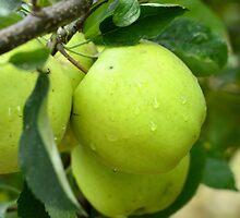 Green Apple by rneimann
