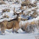 Mule Deer Painting  by Melissa  Hintz