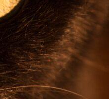 Portrait black cat Sticker