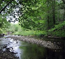 Quiet Brook by Kathleen   Sartoris