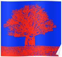 blue and red boab tree  Poster
