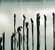 Bird Silhuette, River Derwent, Bridgewater, Tasmania, Australia by Michael Morffew