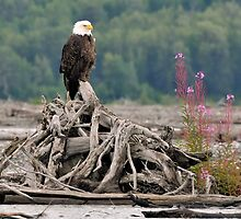 Eagle and Fireweed by Mark Heller