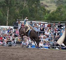 Picton Rodeo BRONC1 by Sharon Robertson