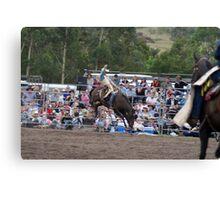 Picton Rodeo BRONC1 Canvas Print