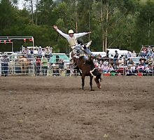Picton Rodeo BRONC8 by Sharon Robertson