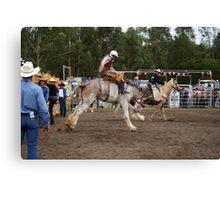 Picton Rodeo BRONC9 Canvas Print