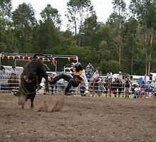 Picton Rodeo BULL1 by Sharon Robertson
