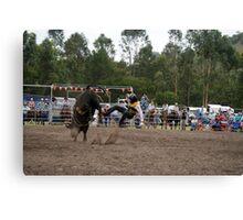 Picton Rodeo BULL1 Canvas Print