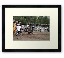 Picton Rodeo BULL5 Framed Print