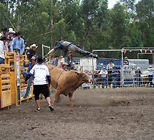 Picton Rodeo BULL6 by Sharon Robertson
