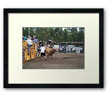 Picton Rodeo BULL6 Framed Print