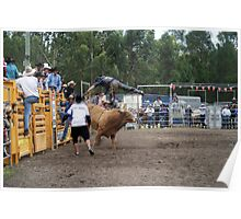 Picton Rodeo BULL6 Poster