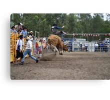 Picton Rodeo BULL8 Canvas Print