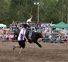 Picton Rodeo BULLKID by Sharon Robertson