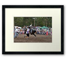 Picton Rodeo BULLKID Framed Print