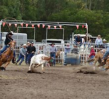 Picton Rodeo ROPE2 by Sharon Robertson